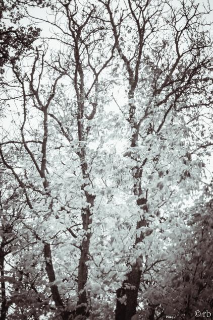 Autumn in Lund